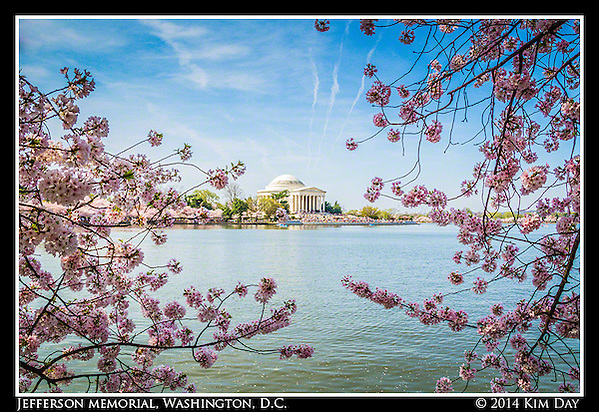 Jefferson Memorial Amid The Cherry Blossoms Washington, DC April 13, 2014 (Kim Day)