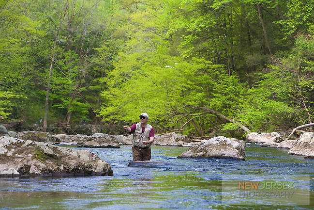 Trout Fly Fishing, Ken Lockwood Gorge, south branch of the Raritan River,New Jersey Wildlife Management Area, Piedmont Region,  Hunterdon County, New Jersey (Steve Greer/Released)