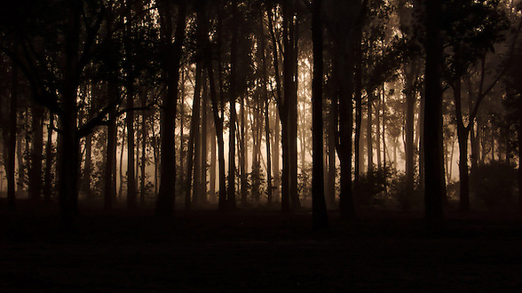 Parque Roosevelt, Canelones, Uruguay. ..This image was taken early in the morning in winter while I was walking my dog KC.  I always carry a small camera with me.  There was a very special light that rendered a unique quality to this image. (Martin Herrera)