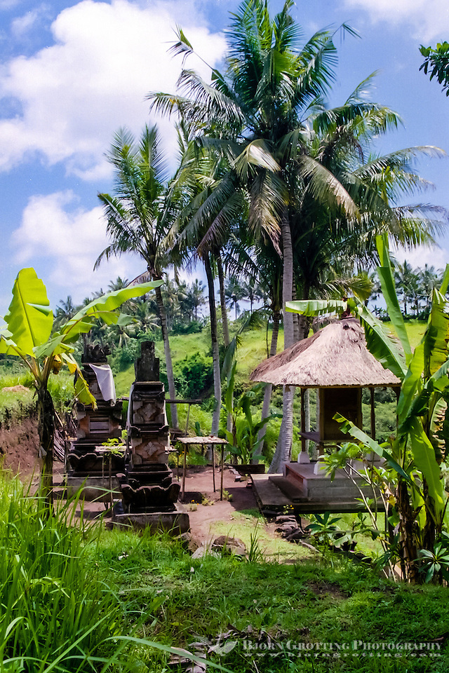 Bali, Gianyar, Bedulu. For a good rice harvest the gods has to be shown proper respect. The rice temple is used once every harvest. (Photo Bjorn Grotting)