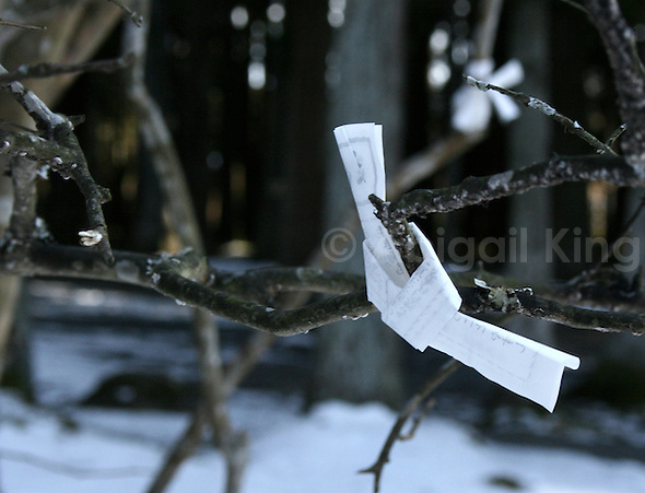 Folded Japanese prayer tied to a tree near Sendai, Tohoku, Japan