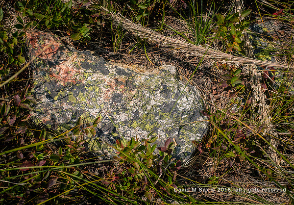 8.5.18 - Lichen Rock... (©David M Sax 2018 - all rights reserved)