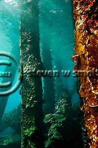 Mala Pier, Maui Hawaii, (Steven W Smeltzer)