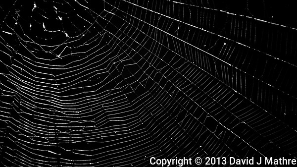 Spider Web. Image taken with a Nikon 1 V2 camera, FT1 adapter, and 70-300 mm VR lens (ISO 160, 185 mm, f/5, 1/80 sec). (David J Mathre)