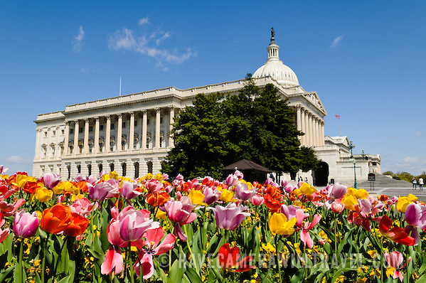 US Capitol Building with Spring Tulips j107151039 US Capitol Buildings Exterior