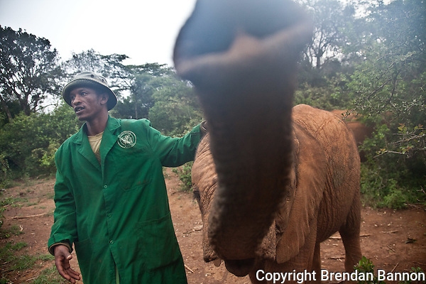 Abdi Kashel, a keeper, with one of the 18 orphaned baby elephants at the David Sheldrick Wildlife Trust in Nairobi National Park. (Photographer: Brendan Bannon)