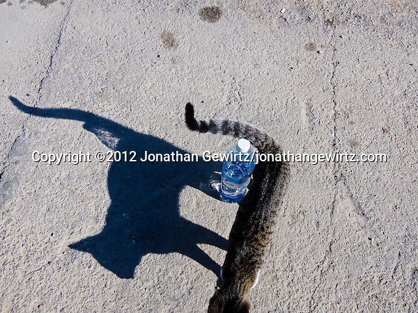 A cat and a plastic water bottle. (&copy; 2012 Jonathan Gewirtz / jonathan@gewirtz.net)