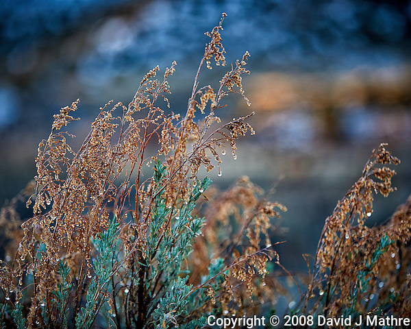 Weeds with morning dew on at Kelley's Place near Cortez, Colorado. Image taken with a Nikon D3 camera and 70-200 mm f/2.8 VR lens (ISO 200, 130 mm, f/2.8, 1/200 sec). (David J Mathre)