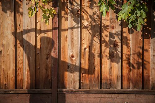 Allen Shuler prunes tree limbs in his yard in Martinez, California (© Clark James Mishler)