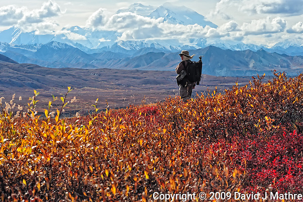 Lone Photographer Viewing Denali. Image taken with a Nikon D3 and 80-400 mm VR lens (ISO 1600, 80 mm, f/16, 1/250 sec). GPS Location (N63.431 W-150.304) (David J. Mathre)