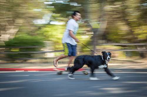 Student Max Caldera and his six month old border Collie, Stella Blue, are out for a run in Calistoga (Clark James Mishler)