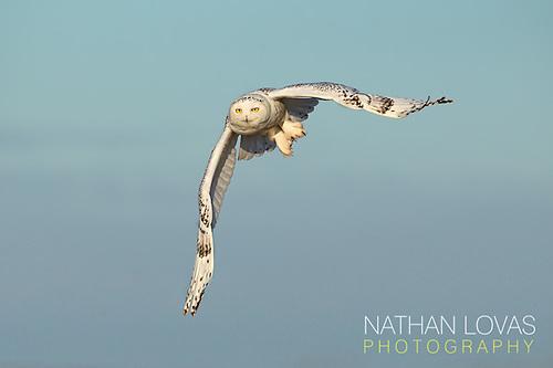 (© Nathan Lovas Photography)