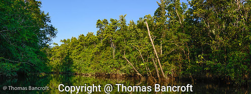 The mount of Barratt Creek along the Daintree River. (G. Thomas Bancroft)