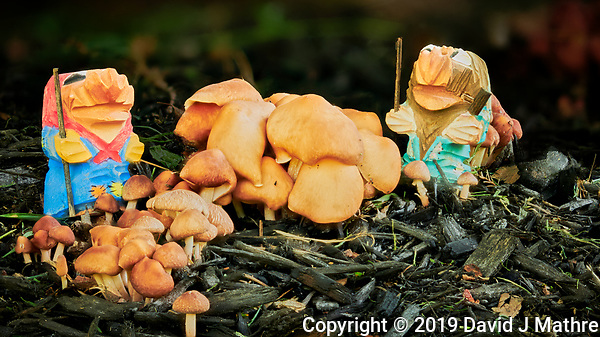 Troll Mushroom Farmers. Composite of 50 focus stacked images taken with a Nikon D850 camera and 105 mm f/1.4 lens (ISO 64, 105 mm, f/1.4, 1/80 sec). Raw images processed with Capture One Pro and Focus Magic. (DAVID J MATHRE)