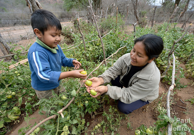Johnny Antesano, a 4-year old Guarani indigenous boy in Choroquepiao, a small village in the Chaco region of Bolivia, helps his mother, Yela Vilera, in their family garden. They and their neighbors started their gardens with assistance from Church World Service, supplementing their corn-based diet with nutritious vegetables and fruits. (Paul Jeffrey)