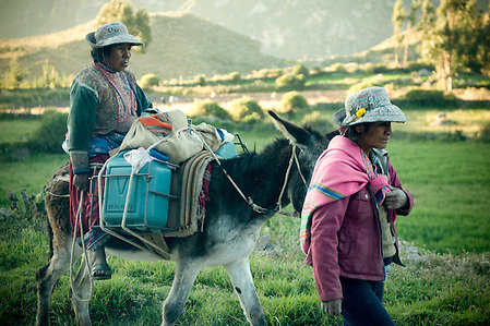 The villagers of the Colca Valley work long days herding animals and farming the lands.  As there are little to no cars, women carry their belongings on their backs or by mule if they are fortunate to have one.  Visitors to the villages of the Colca Canyon are reminded of how life used to be in a simpler time. (Michelle Stark)