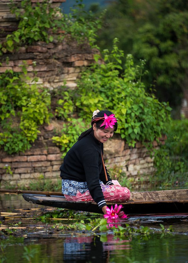 INLE LAKE, MYANMAR - CIRCA DECEMBER 2013: Burmese woman collecting lotus flowers in Sankar village (or Samka ). A small village located in the south of Inle Lake. (Daniel Korzeniewski)