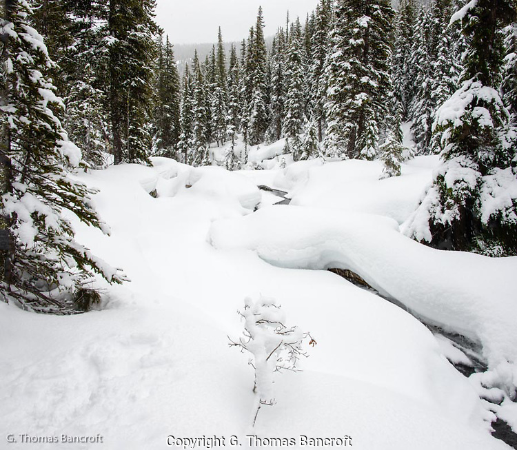 Roaring Creek drops down through a snow covered forest (G. Thomas Bancroft)