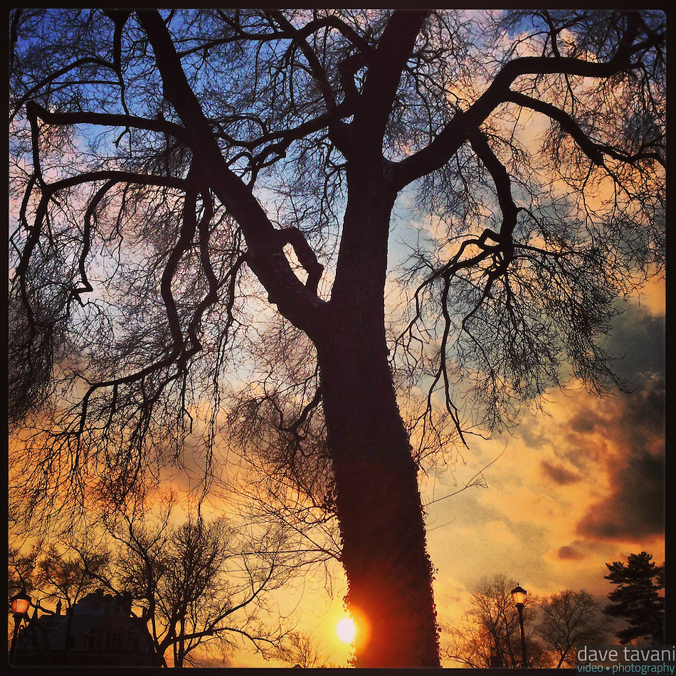 The late afternoon sun hides behind a tree on Johnson Street in the Germantown section of Philadelphia, February 3, 2013. (Dave Tavani)