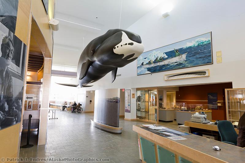 Bowhead whale in the Barrow Museum, Barrow, Alaska (Patrick J. Endres / AlaskaPhotoGraphics.com)