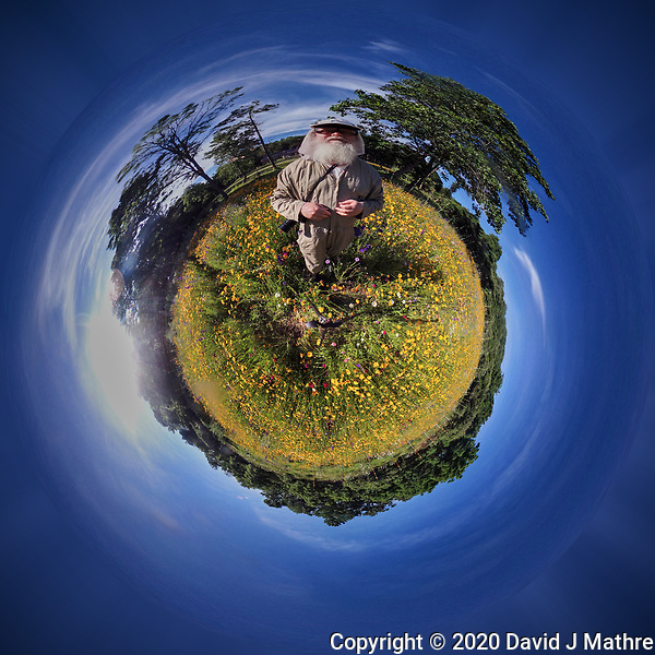 Wildflower Meadow -- Little Planet View. Image taken with a Garmin VIRB-360 camera (ISO 100, 1 mm, f/2, 1/1996 sec) (DAVID J MATHRE)