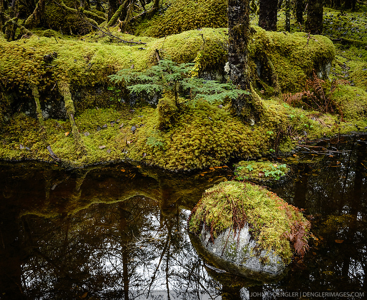 Moss covers the forest floor along the Trail of Time Trail near the Mendenhall Lake and Mendhenall Visitor Center just outside Juneau, Alaska. (© John L. Dengler/Dengler Images)