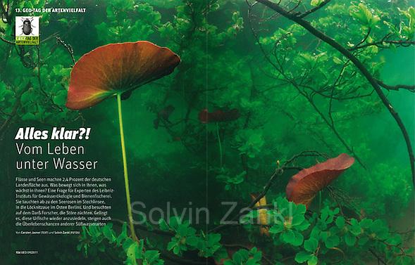 GEO day of Biodiversity 2011 | GEO Tag der Artenvielfalt 2011 (Solvin Zankl)