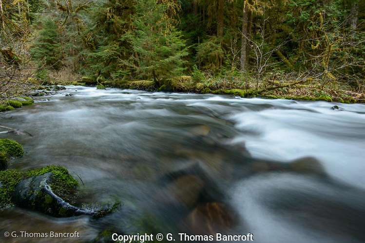 The gentle rapids along Lillian River gave a soft backdrop to my camp. (G. Thomas Bancroft)