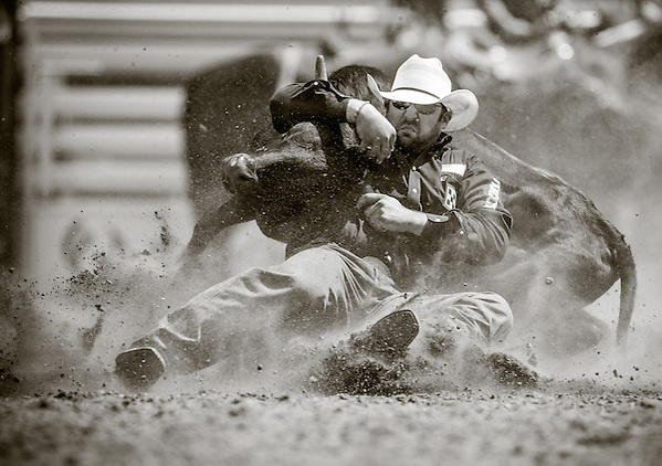 Luke Branquinho on his way to a 6.6 second time in steer wrestling at the second round of the Calgary Stampede Rodeo in Calgary, Alberta. (Darren Carroll)