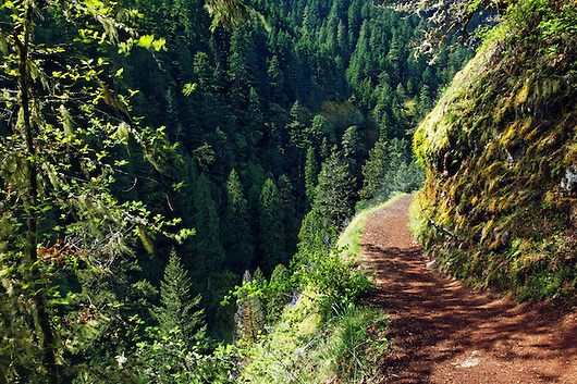 Eagle Creek Trail cut into cliff, Eagle Creek Recreation Area, Columbia River Gorge National Scenic Area, Oregon, USA (Brad Mitchell)