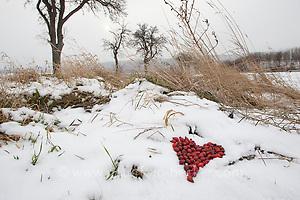 Naturkunst im Winter, mit roten Hagebutten, Hagebutte wird ein Herz in den Schnee gelegt (Frank Hecker)
