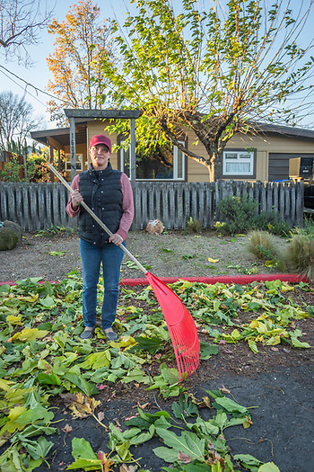"""I know it's too windy to rake leaves, but this is the only day I have off.""   -Wine educator Ilya Smock rakes in front of her home on Harley Street in Calistoga. (Clark James Mishler)"