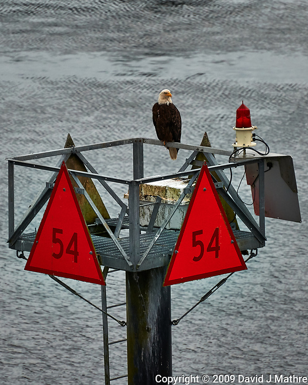 Bald Eagle on Channel Marker 54 From the deck of the MV Columbia (Alaska Marine Highway). Image taken with a Nikon D3x camera and 70-300 mm VR lens (ISO 400, 280 mm, f/5.6, 1/125 sec). (David J Mathre)