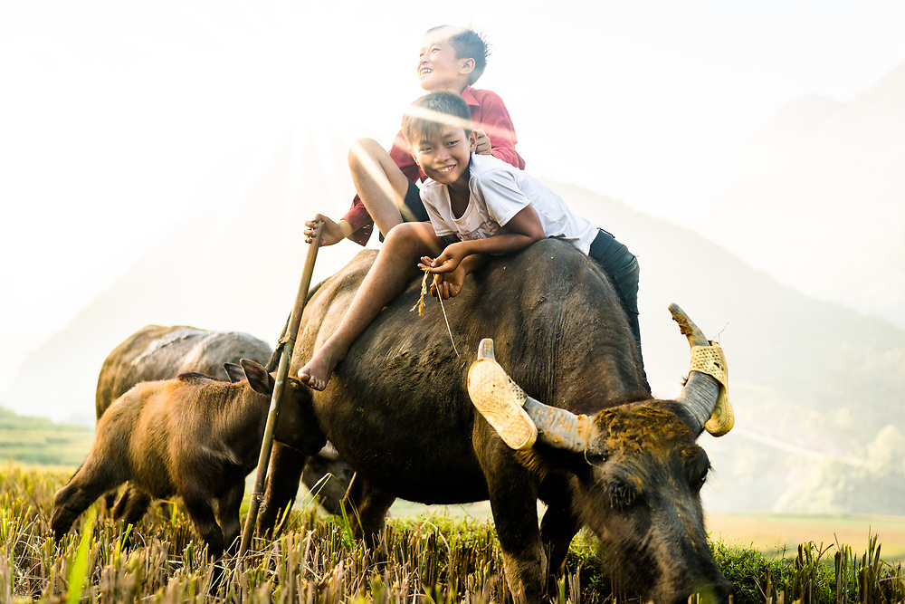 Just back from a few weeks in the north for travels and work. I'm sure you all really missed me, right? Boys play on a buffalo near Ta Van, outside of Sapa in the northern province of Lao Cai. It's a classic scene in the north, but one I can never resist shooting! I should have a good stock of new images to post in the coming days and weeks, so stay tuned... (Quinn Ryan Mattingly)