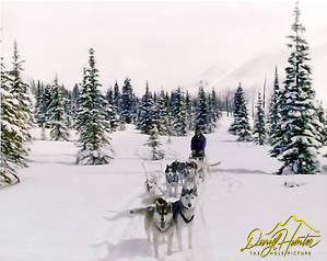 Dogteam in the Alaskan Wilderness, Dog musher, Daryl L. Hunter, Hatcher Pass, north of Willow AK (Daryl Hunter)