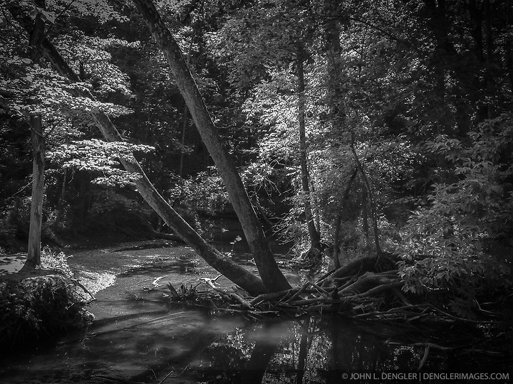 Sunlight filters through the trees along a creek in Rock Bridge Memorial State Park just outside of Columbia, Mo. (John L. Dengler)