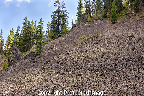The hillside was covered with small basalt lava rocks in the Manastash Ridge area of Wenatchee National Forest. (Thomas Bancroft)