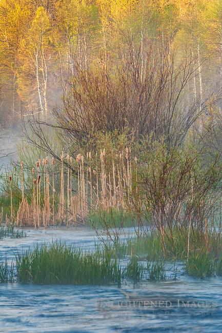 Taylor Creek, near South Lake Tahoe, El Dorado County, California (Gary Crabbe)