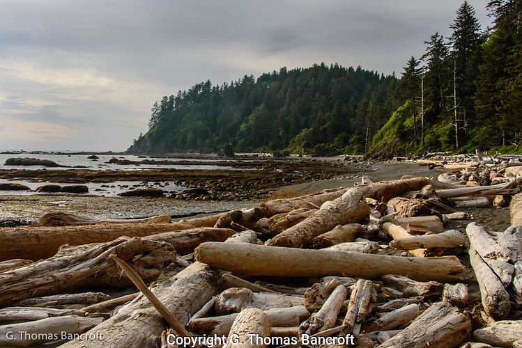 The logs were piled like thrown linclon logs.  The storm surges must have been impressive to push these logs up on the beach and stack them on top of each other.  Can you imagine what it might have looked like? (G. Thomas Bancroft)