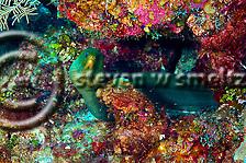 Penny's Arch, Grand Cayman (Steven W Smeltzer)