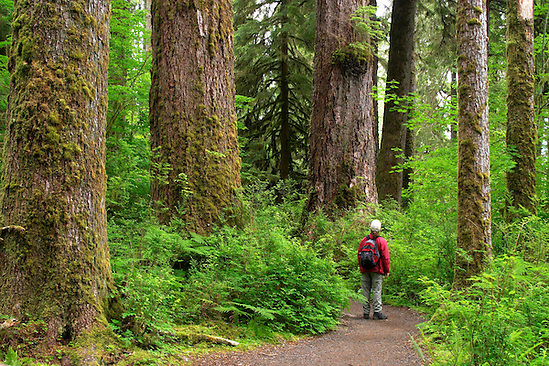 Woman hiking on trail through temperate old growth rain forest, Hall of Mosses Trail, Hoh Rain Forest, Olympic National Park, Olympic Peninsula, Jefferson County, Washington, USA (Brad Mitchell/Brad Mitchell Photography)