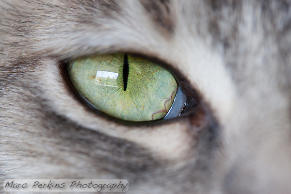 Yes, closeup pictures of cat eyes are a cliche, but how can I resist taking a piture of Lucca's green eyes with my new macro lens? (Marc C. Perkins)