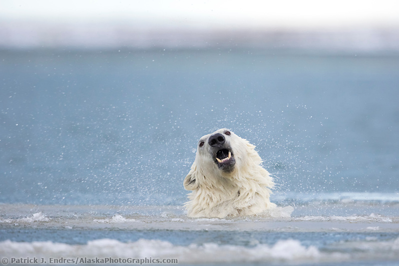 arctic wildlife photography