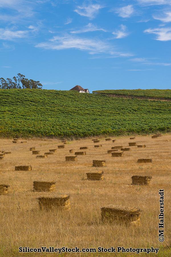 California Landscape (M. Halberstadt / SiliconValleyStock.com)