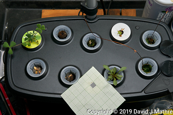 AeroGarden Bounty 01 at 42 days. 01 Crimson Clover; 02 California Poppy; 03 Red Poppy Mix; 04 Lupine; 05 Strawberry; 06 Blanket Flower; 07 Sweet Alyssum; 08 Coreopsis Lance-leaf; 09 Strawberry. Image taken with a Leica TL-2 camera and 35 mm f/1.4 lens (ISO 250, 35 mm, f/8, 1/80 sec). (DAVID J MATHRE)