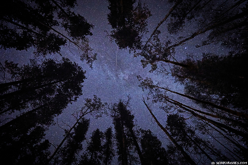 Looking upwards through treetops toward a nighttime sky of stars. (Seth K Hughes)