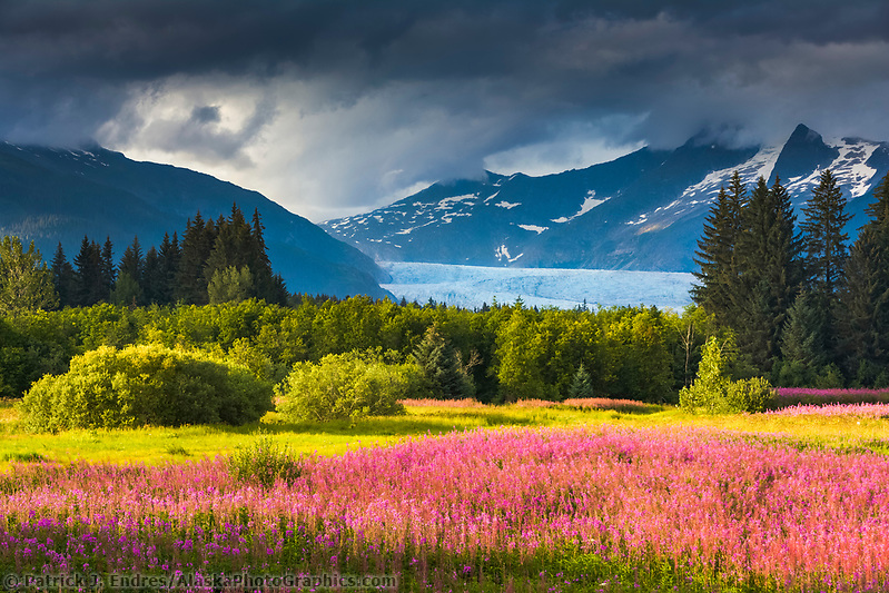 Clouds over the Coast mountains and the Mendenhall glacier, fireweed in full bloom in Brotherhood Park, Juneau, Alaska. (Patrick J Endres / AlaskaPhotoGraphics.com)