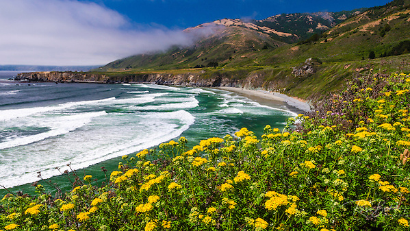Wildflowers above Sand Dollar Beach, Los Padres National Forest, Big Sur, California USA (© Russ Bishop/www.russbishop.com)