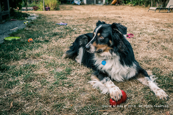 8.11.17 - Me & My Kong.... (© David M Sax 2017 - all rights reserved)