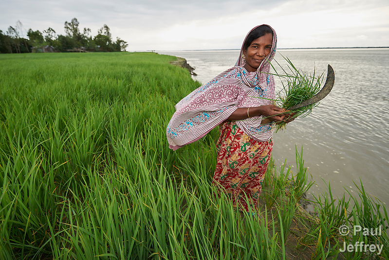 Jabeda Begum stands in her rice field in Kunderpara, a village on an island in the Brahmaputra River in northern Bangladesh. Severe flooding in August 2017 eroded the bank, washing away part of her farm. (Paul Jeffrey)